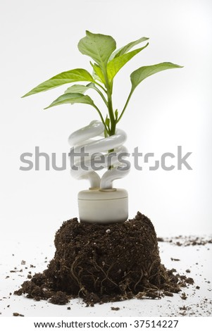 Concept - Going Green - A plant sprouts up through an energy efficient lamp - stock photo