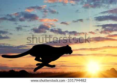 Concept of hunting. Running cheetah silhouette against the evening sky in the sun - stock photo