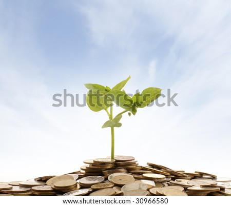 Concept of money and living plant