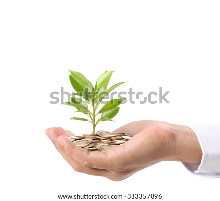 Concept of money plant growing from coins in hand - stock photo