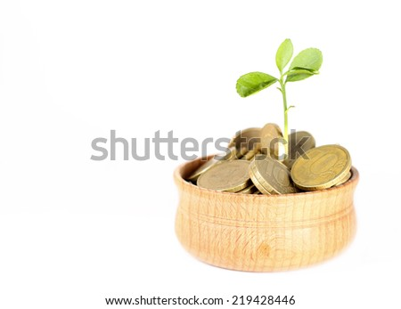 Concept of money tree - plant grows in bowl with coins - stock photo