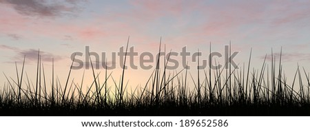 Concept or conceptual black grass or plant field or meadow silhouette in summer or spring evening over a sky at sunset with clouds background, metaphor to nature, landscape, environment or freedom - stock photo