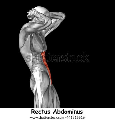 Concept or conceptual 3D illustration chest human anatomy anatomical and muscle isolated on black background metaphor to body, tendon, spine, fit, abs, strong, biological, gym, fitness, health medical - stock photo