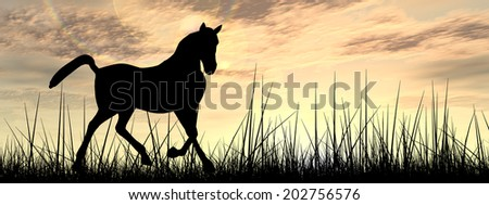 Concept or conceptual young beautiful black horse silhouette in grass or meadow over a sky at sunset landscape background, metaphor to farm, nature, wild, freedom, free, power, healthy, strong animal