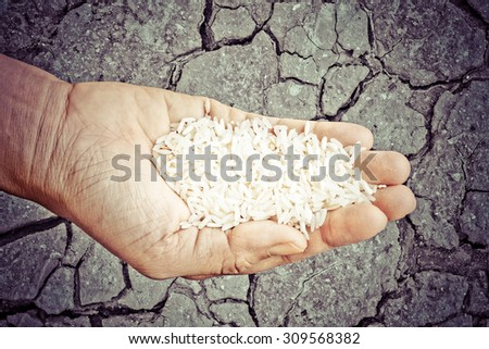 concept save the world ,hand man holding paddy on Barren ground  background - stock photo