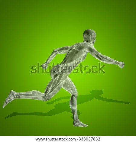 Concept strong human or man 3D anatomy body with muscle for health sport on green background for medicine, sport, male, muscular, medical, health, medicine, biology, anatomical, strong fitness design - stock photo