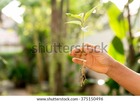 Concept successful hand holding new life plant with healthy roots - stock photo