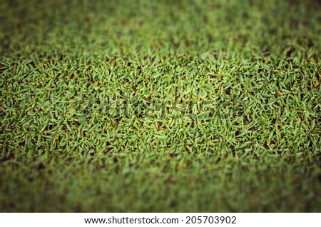 concept vintage grass Close-Up  - stock photo