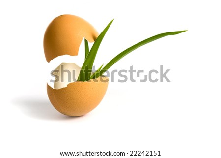 concepts egg isolated on white background