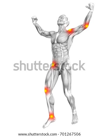 male anatomy stock images  royalty