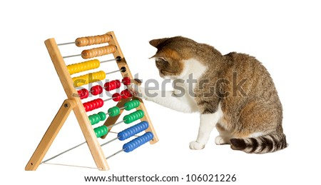 Conceptual image of a clever cat mathematician sitting playing with a large colourful abacus moving it around with its paw as it performs calculations - stock photo