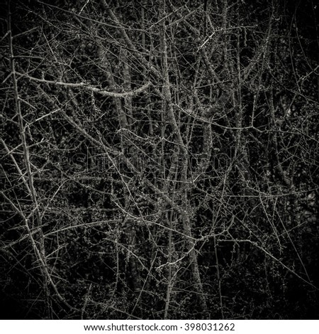 Conceptual Image Of A Dark Thorny Bush Forest In A Forest - stock photo