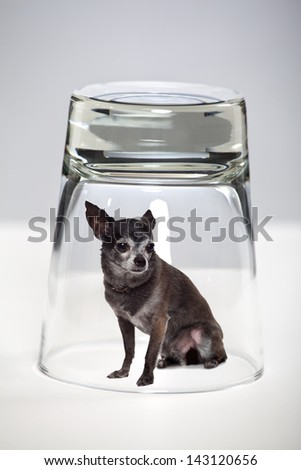 Conceptual image of a dog trapped in a glass - stock photo