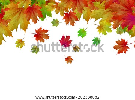 Conceptual image with colorful leaves on white background. Place for text