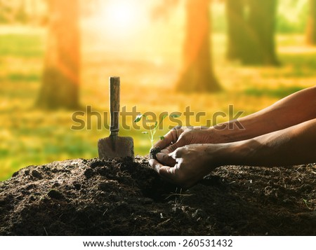 conceptual of hand planting tree seed on dirty soil against beautiful sun light in plantation field use for human activities and future growth - stock photo