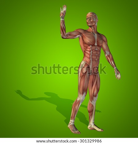 Conceptual strong human, man 3D anatomy body with muscle for health, sport on green background for medicine, sport, male, muscular, medical, health, medicine, biology, anatomical strong fitness design