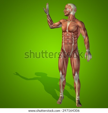 Conceptual strong human or man 3D anatomy body with muscle for health or sport on green background for medicine, sport, male, muscular, medical health medicine biology anatomical strong fitness design