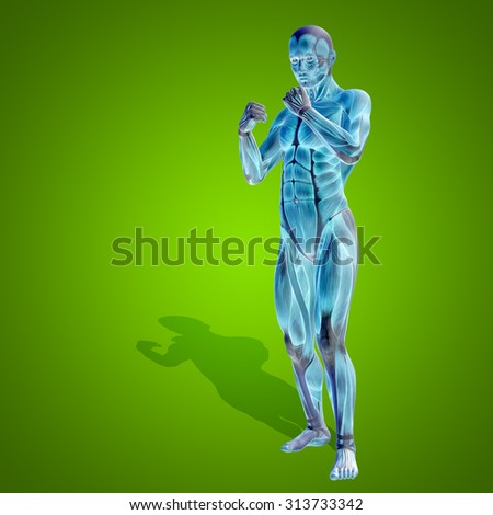Conceptual strong human or man 3D anatomy body with muscle for health or sport on green background for medicine sport male muscular, medical, health, medicine biology anatomical, strong fitness design - stock photo