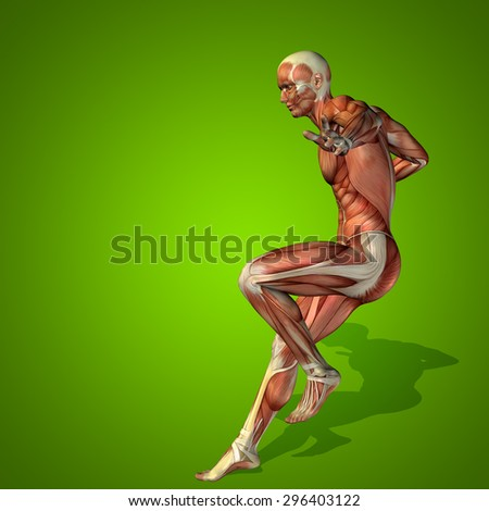 Conceptual strong human or man 3D anatomy body with muscle on green background metaphor to medicine, sport, male, muscular, medical, health, medicine, biology, anatomical, strong, fitness, design - stock photo