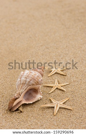 Conch shell and starfish at beach close up