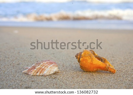 Conch shell on beach with waves - stock photo