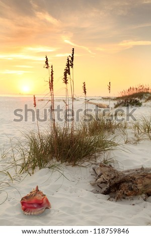 Conch Shell Sea Oates on a White Sand Beach at Sunset - stock photo