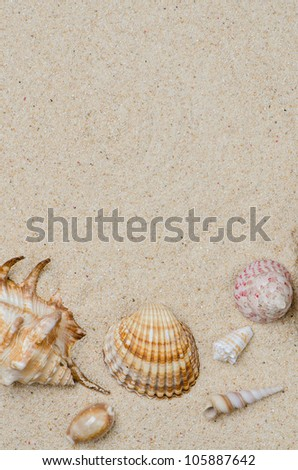 Conchs and shells on the beach sand background. - stock photo