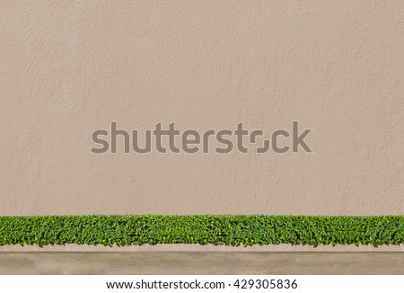 concrete wall concept : Green Bushes fences at concrete wall background with concrete floor at walk way - stock photo