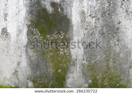 concrete wall with grunge texture and moss green algae , texture background - stock photo