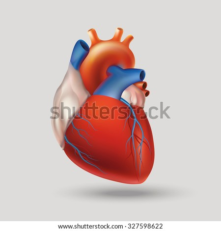 Conditional image of a model of the human heart (hollow muscular organ that pumps the blood through the circulatory system by rhythmic contraction and dilation). Light background. Raster version. - stock photo