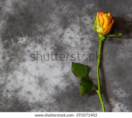 Condolence card with rose - stock photo