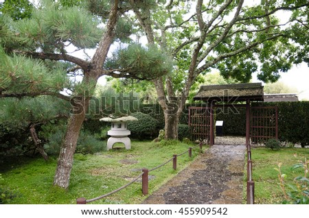 Cone tree and pathway in Japanese garden