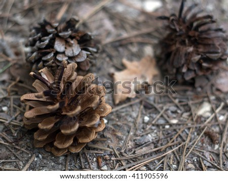 cones. cone pine on the land.