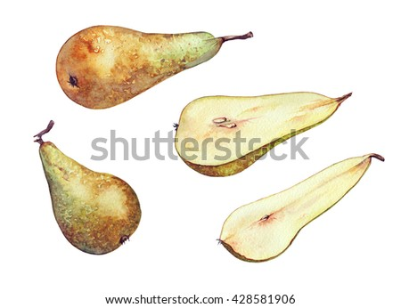 Conference pears - hand-drawn watercolor illustration of pears and slice pears. Separated, isolated on white - stock photo