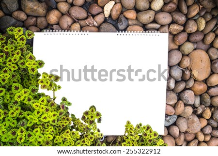 Conflict nature wallpaper pattern and white frame./ Conflict nature wallpaper.  - stock photo