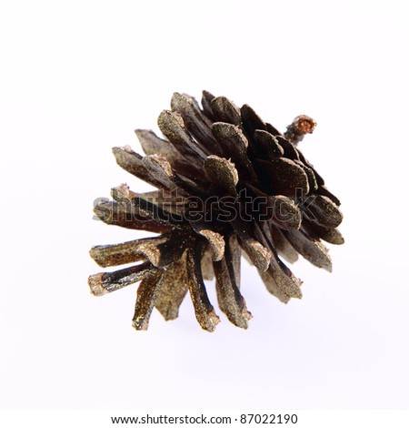 Conifer cone covered with gold glitter - stock photo