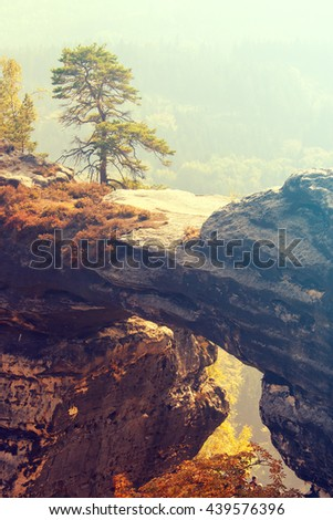 Conifer tree on a cliff in the autumn. Toned - stock photo