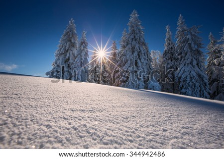 conifer trees in winter in Black Forest, Germany - stock photo