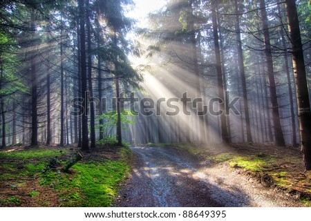 coniferous forest early in the morning - God beams - stock photo