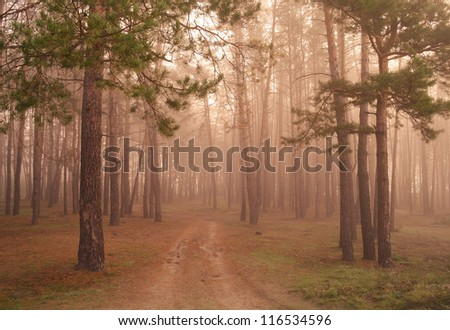 Coniferous forest illuminated by the morning sun on a foggy autumn day. - stock photo