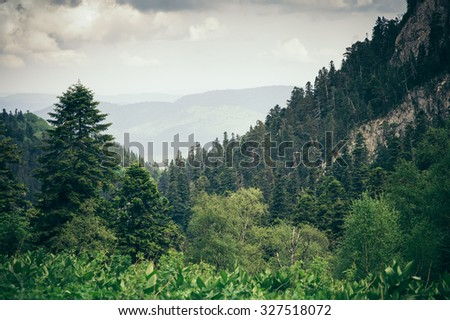 Coniferous Forest Mountains Caucasus beautiful landscape moody weather colors