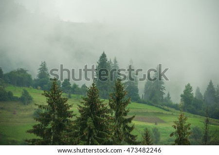 coniferous forests in the mountains in the fog