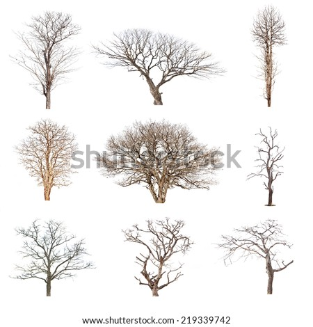 Conlection of trees without leaves isolated on white background.