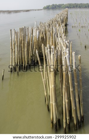 Conservation of wetlands and water erosion in the Gulf of Thailand is a problem in every year. To lose a lot of ground. Conservation began planting bamboo stick to remove the soil flows into the sea - stock photo