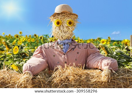Consternated looking straw man with hat and sunflower eyes sits behind a wall of straw bales and looks to the viewer. The background shows a sunflower field.  - stock photo