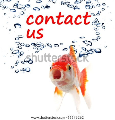 contact us concept with goldfish showing support service or email communication - stock photo
