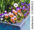 Container gardening. Purple, pink and white spring flowers in blue ceramic planter. - stock photo