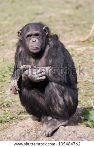 Contemplating - stock photo