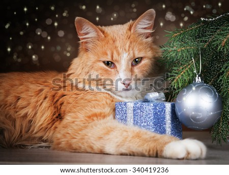 Contented ginger cat lying under Christmas tree holding a gift with his paw - stock photo