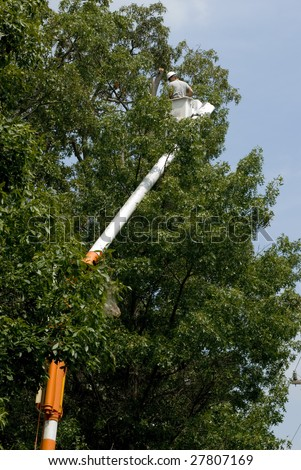 Contractor cutting dead limbs out of a tree for electrical company. - stock photo
